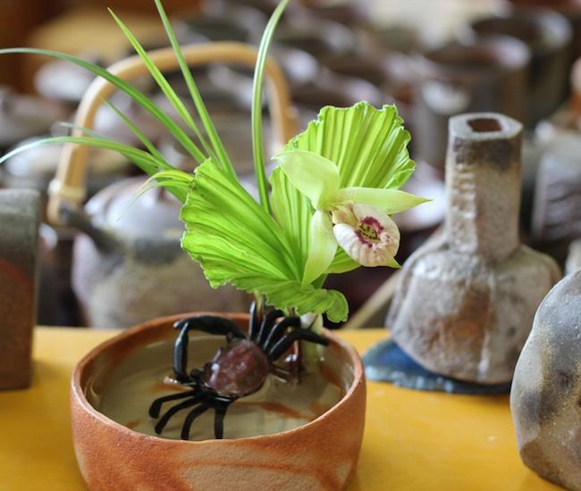 今日の花「クマガイソウ/熊谷草」