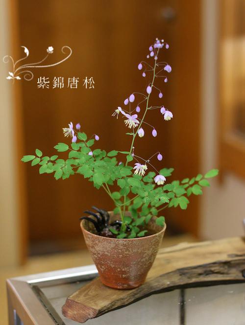 紫錦唐松(シキンカラマツ)