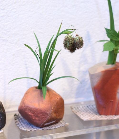 今日の花「タヌキのしっぽ」