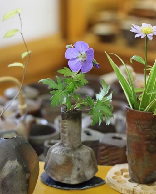 今日の花「アオバナ フウロ」