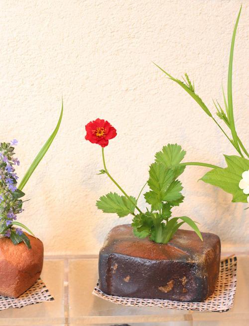 今日の花「赤花大根草」