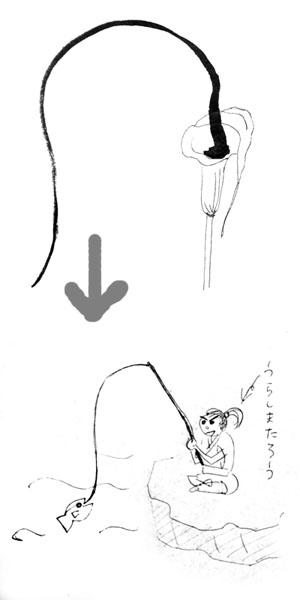 図解:ウラシマソウ/浦島草