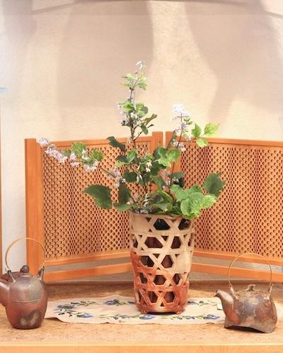 今日の花「草牡丹/クサボタン」