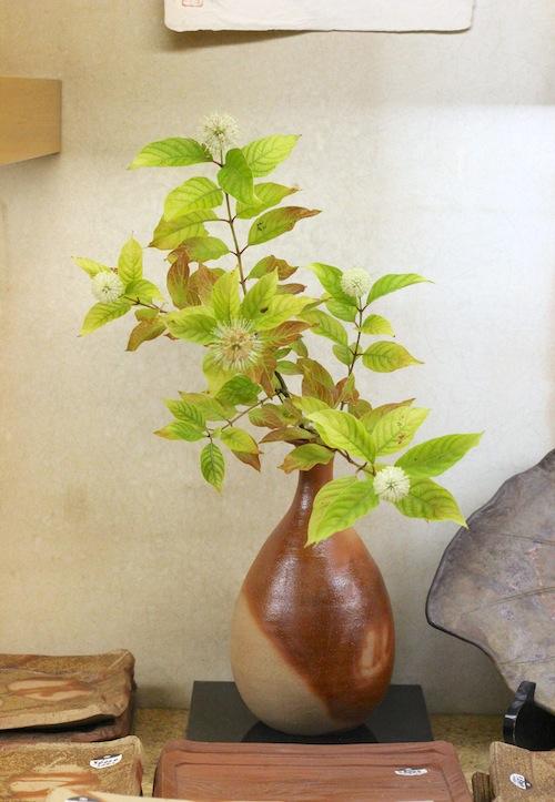 タニワタリの木
