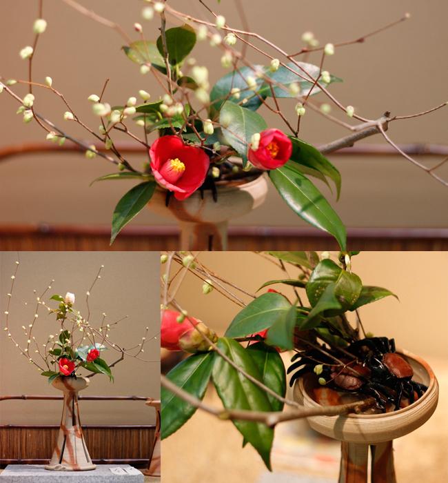 今日の花*イヨミズキ