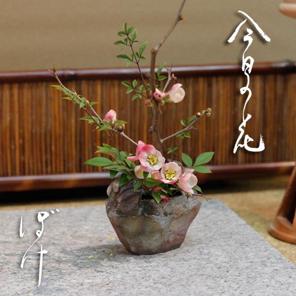 今日の花「ボケ(木瓜)」