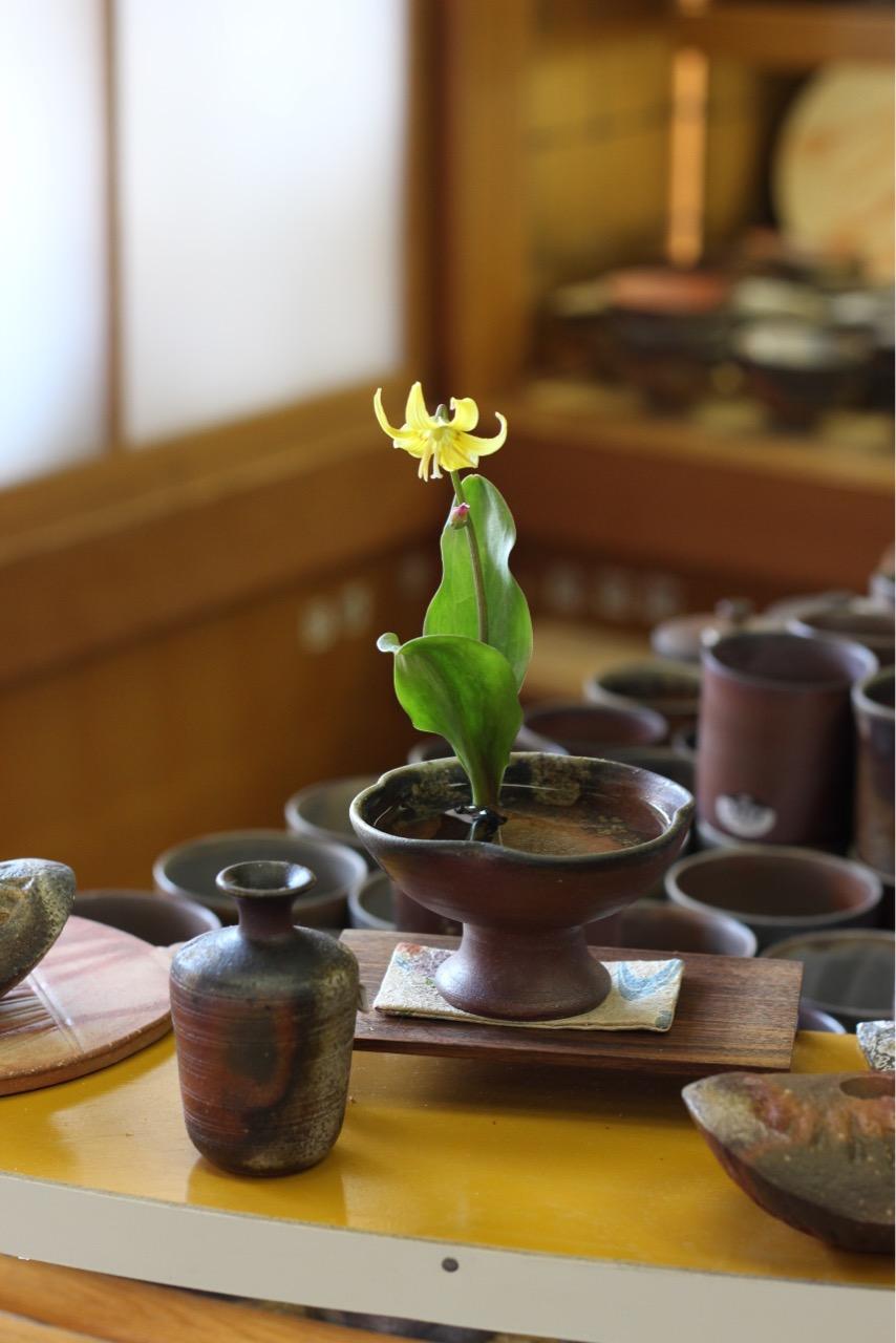 黄花片栗/キバナカタクリ